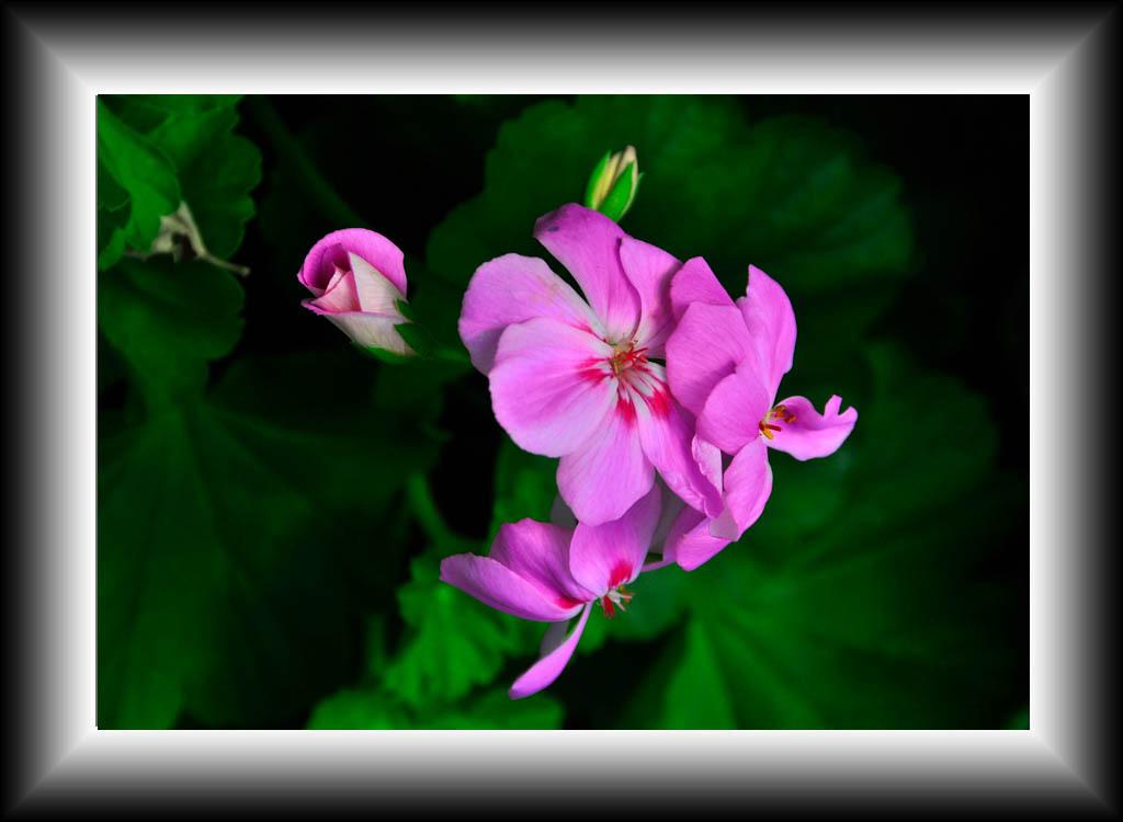 들꽃1.jpg