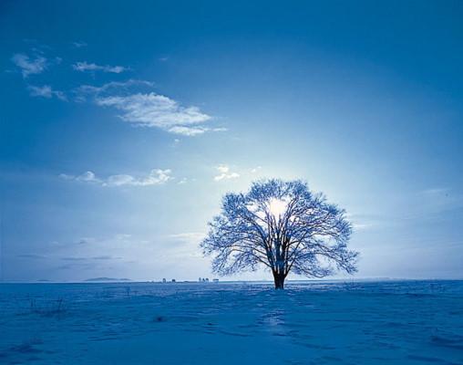 겨울나무.jpg